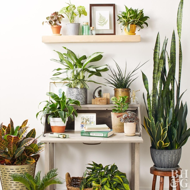 poisonous-houseplants-874825ab